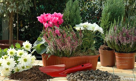 Come decorare casa in autunno for Case ricoperte di edera