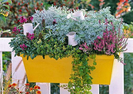 piante_autunnali
